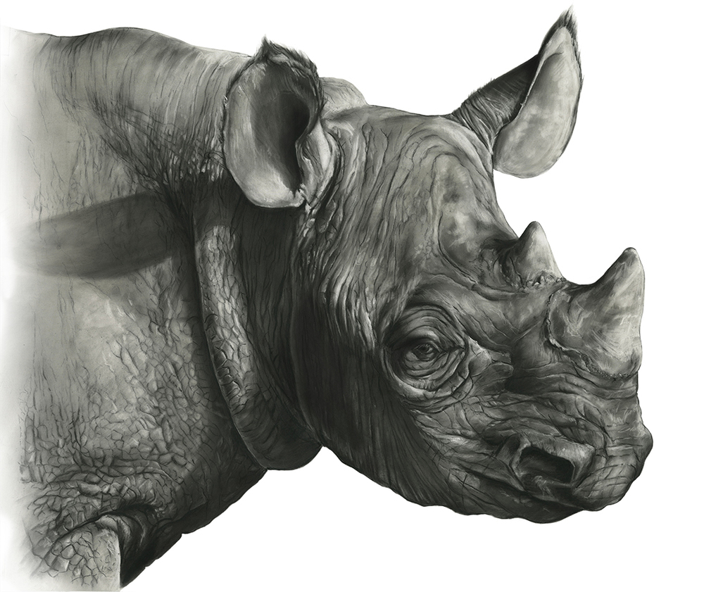 Black Rhino: Detail