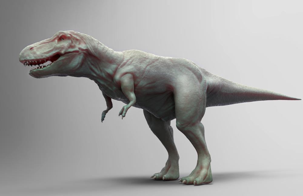 Modeled Tyrannosaurus