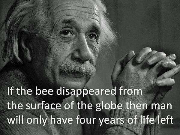 The most popular fake Einstein quote on the internet. Who knew everyone was so obsessed with bees and the apocalypse?