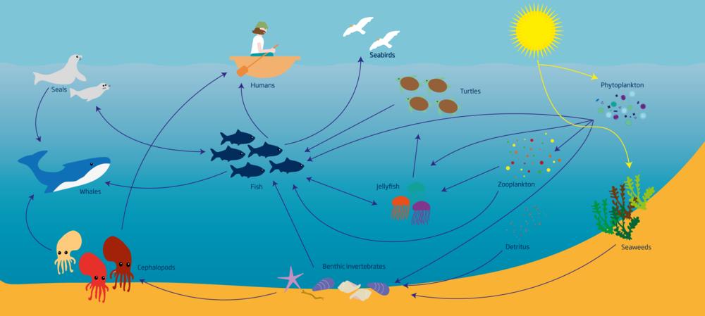 simplified-marine-food-web-2403-1.png