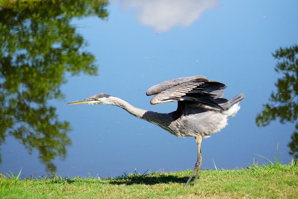 Heron Stretching