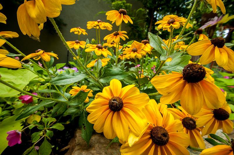 cher_austin_garden-001.jpg
