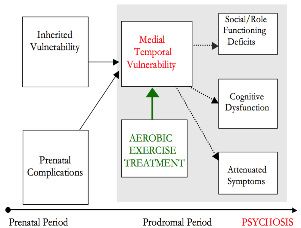 Figure 13.  Exercise Model of Psychosis: Mittal