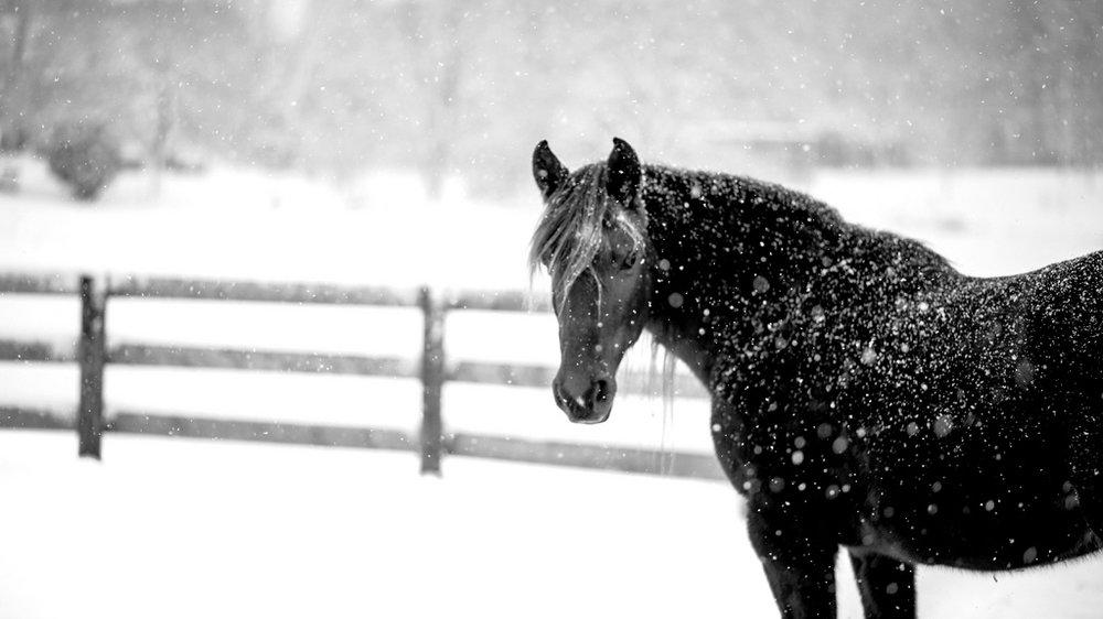 black horse snow.jpg