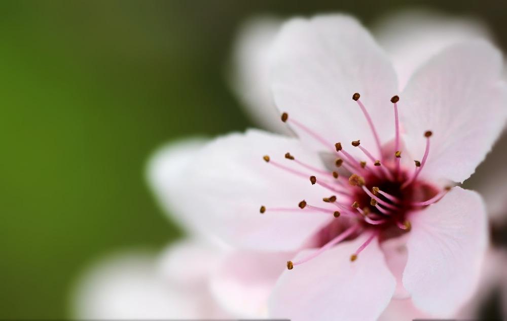 flower-776841_1920.jpg