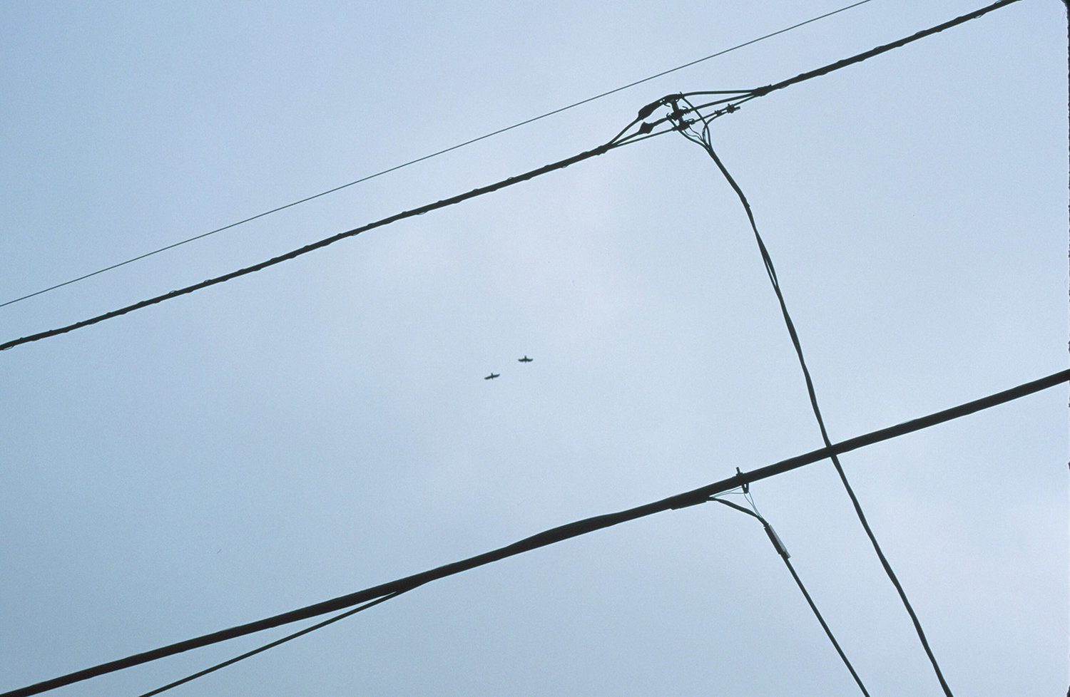 Hex Telephone Wires and Birds - Grey — Deetchums