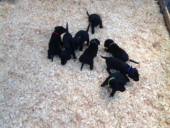 pups2014-6 (1).jpg
