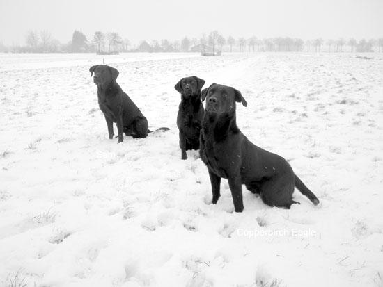 sneeuw2013_08.jpg