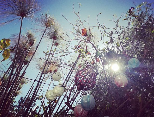 My yoga view in the garden. #paradise #bliss #yoga #garden #magic #outdoors #sunshine #sun #autumn #sky #yogaeveryday #rural #home #portugal