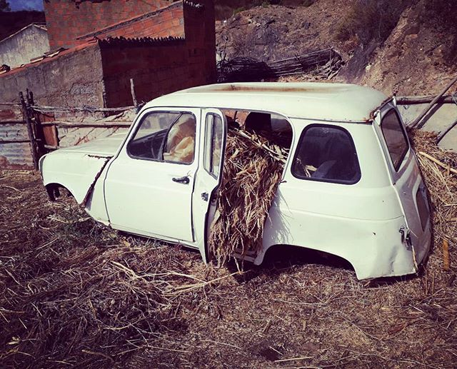 Harvest time in rural Portugal.. loving and living the rural life for a while.. #portugal #farm #life #love #home #outdoors #countryside #car #harvest #retro