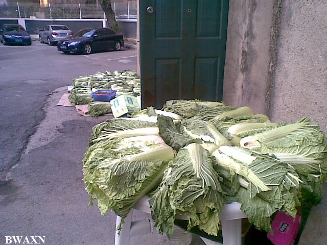 Cabbage at work
