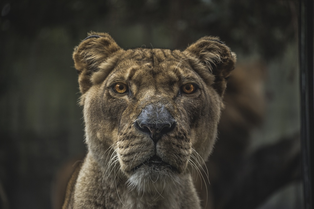 Surely you'd much rather ask the tough questions that have to face your inner lions?
