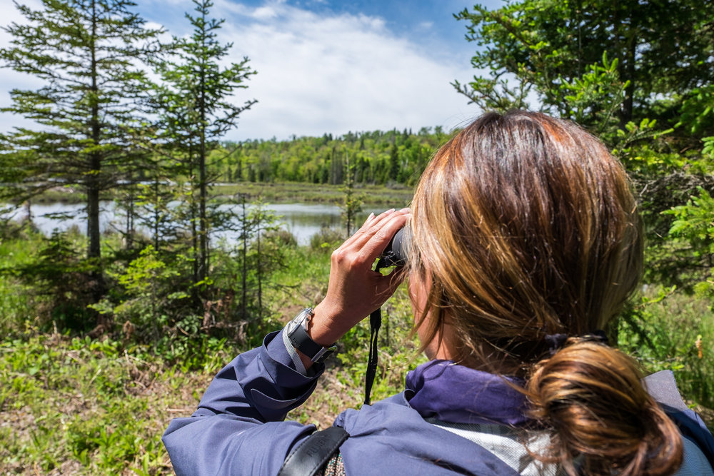 Looking for moose in Isle Royale National Park in Michigan