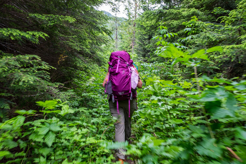 Into the alpine forest backcountry in North Cascades National Park in Washington state