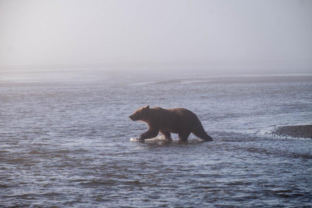 Lake Clark National Park and Preserve, Alaska, USA