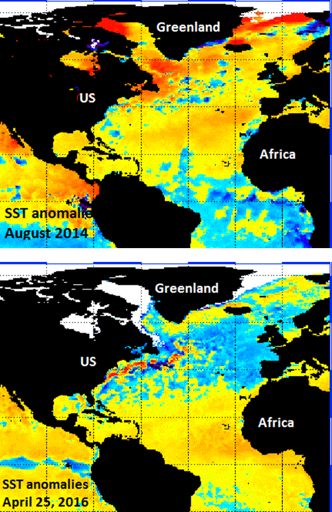 Sea surface temperature anomalies in the Atlantic Ocean: August 2014 (top), April 25, 2016 (bottom); courtesy NOAA