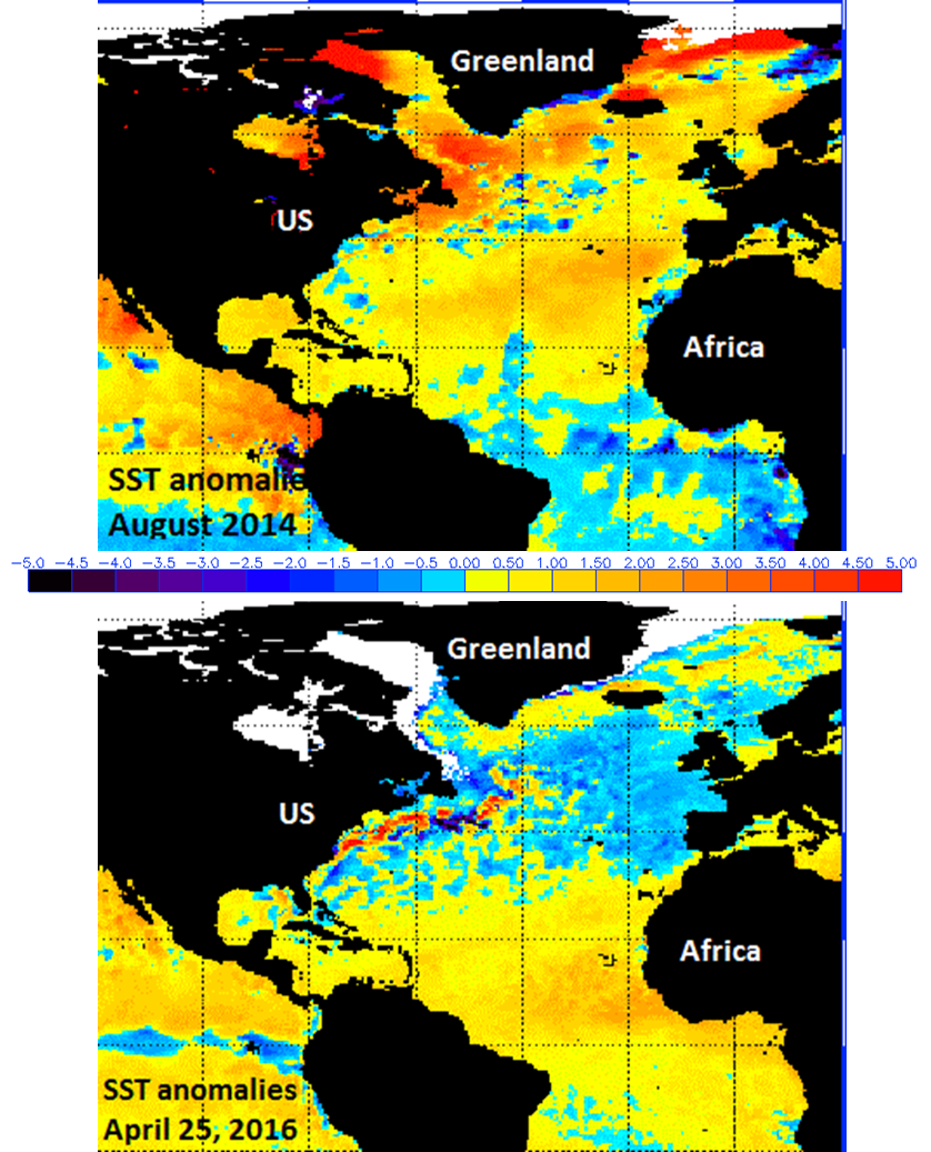 Sea surface temperature anomalies: August 2014 (top), Today (bottom) where above-normal is represented by yellows, oranges and reds, below-normal is represented by blues and purples; courtesy NOAA