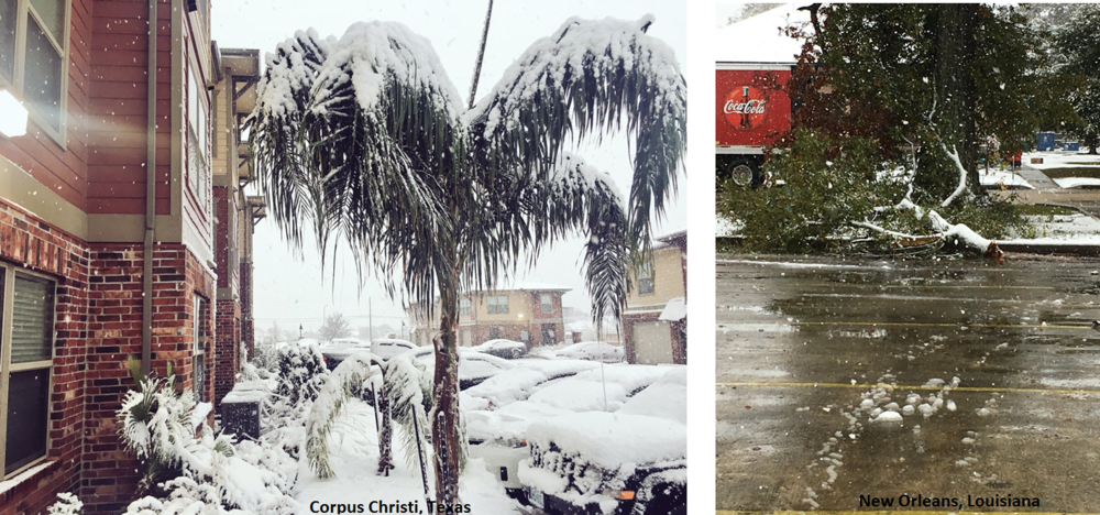 Wintry conditions across the Deep South early today with snow in Corpus Christi, Texas (left) where it was 82 degrees two days ago and ice/snow combination in New Orleans, Louisiana (right)