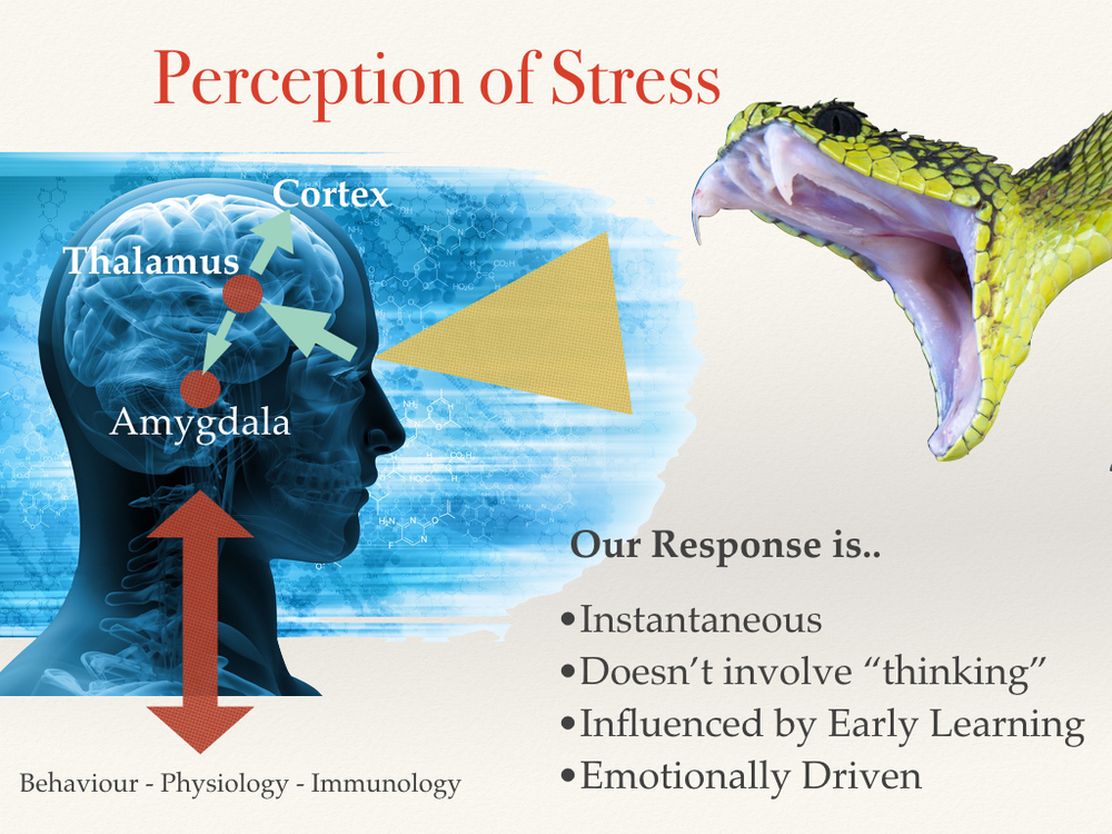 perception-stress