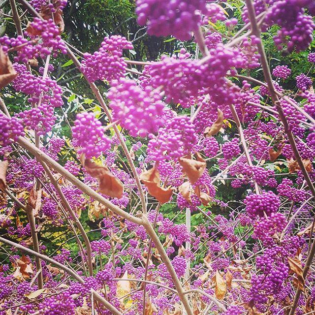 Autumn berrys.