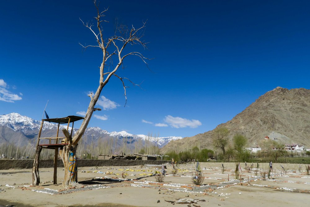 Dry trees and desert landscapes