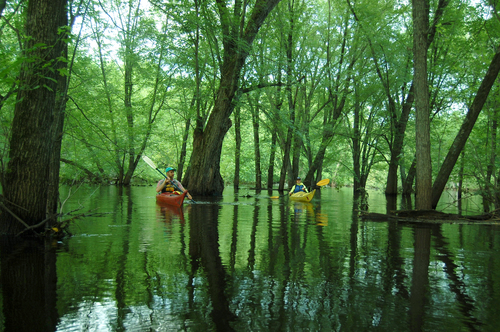 flooded forest.jpg