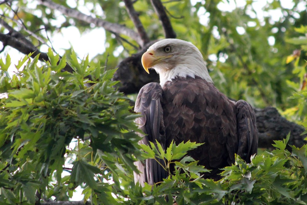 Raptor Tour - 10:45am$80/adult, $65/child