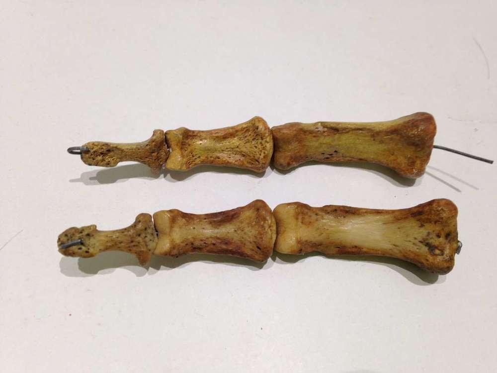 doigt-squelette-os-articule-phallanges-resine-copie-art-restaurarte.jpg