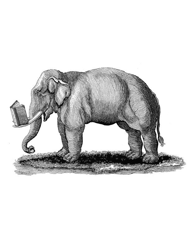 pe_elephant.jpg