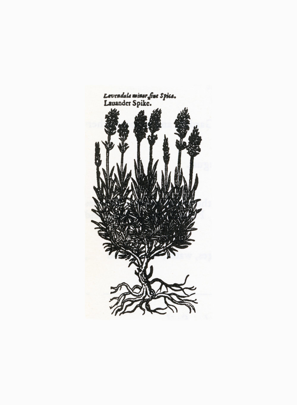 2017-Historie-of-Plants-002-300.jpg
