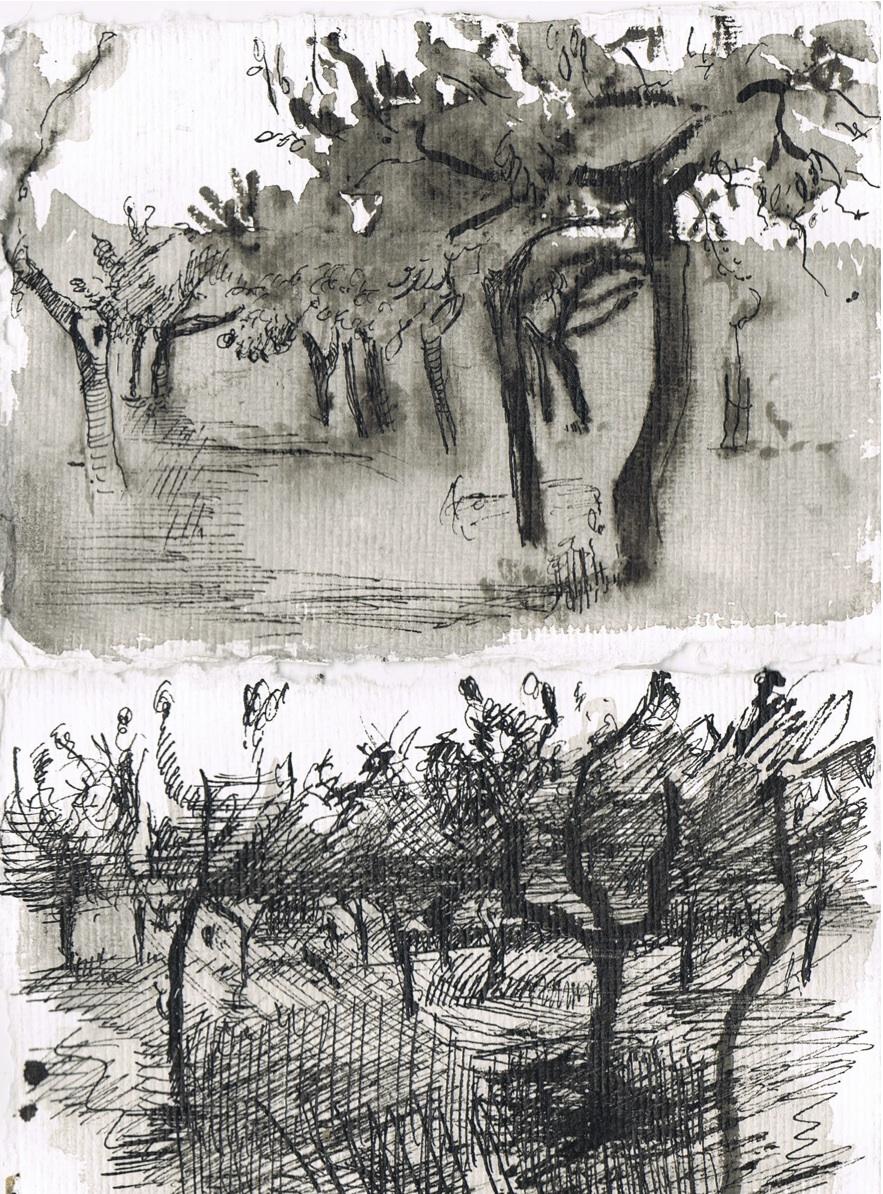 Orchard 2.jpg