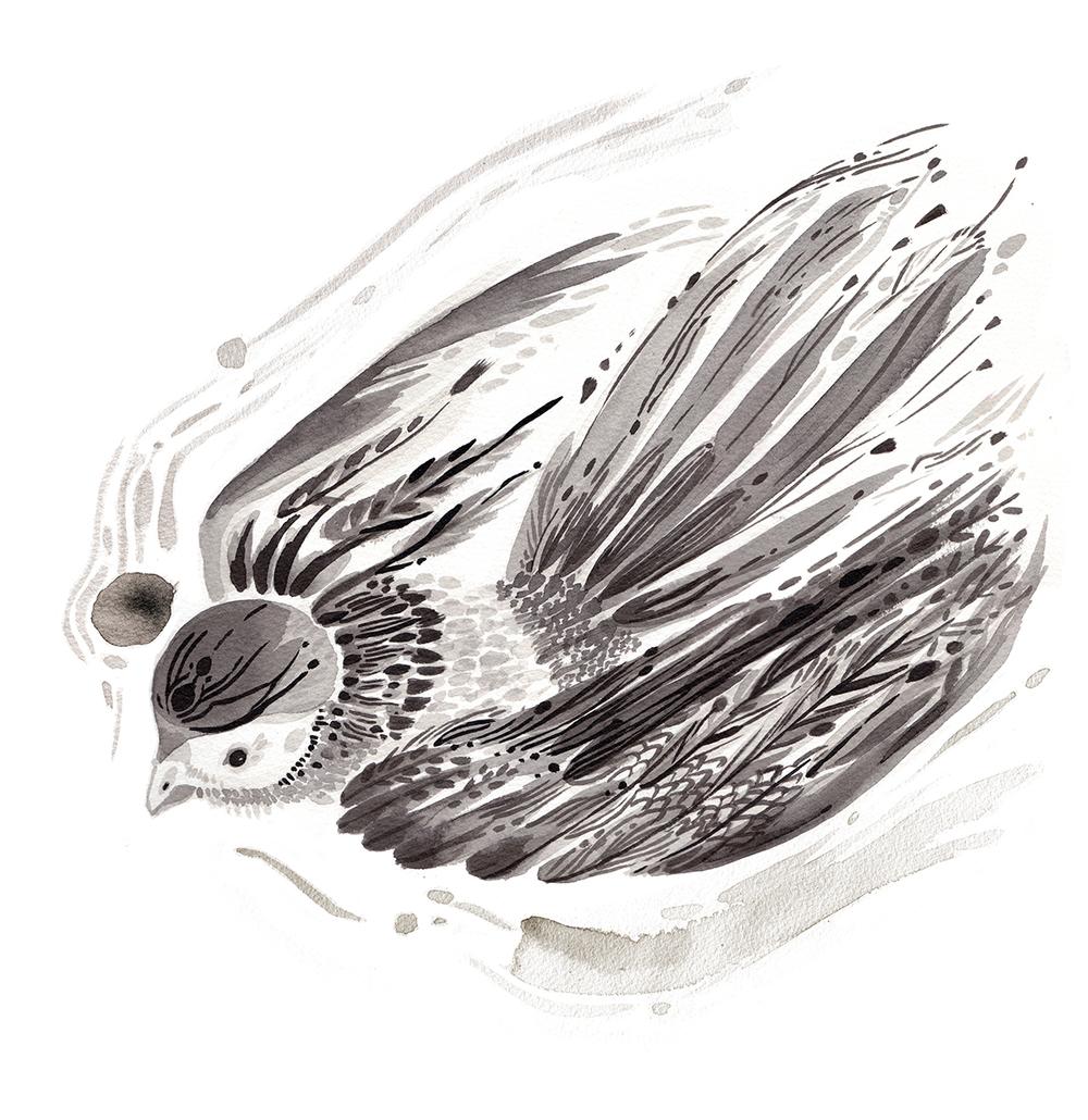bird_all.jpg