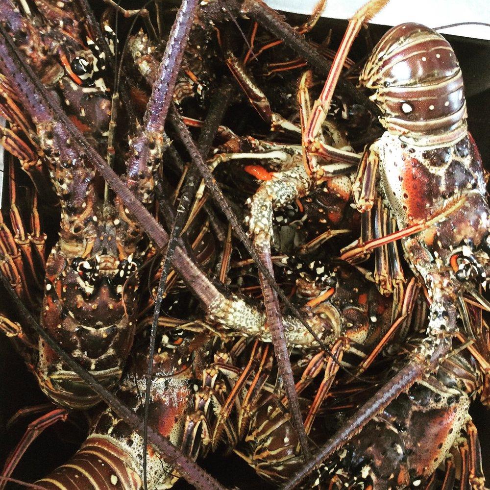 fresh+Caribbean+lobster.jpeg