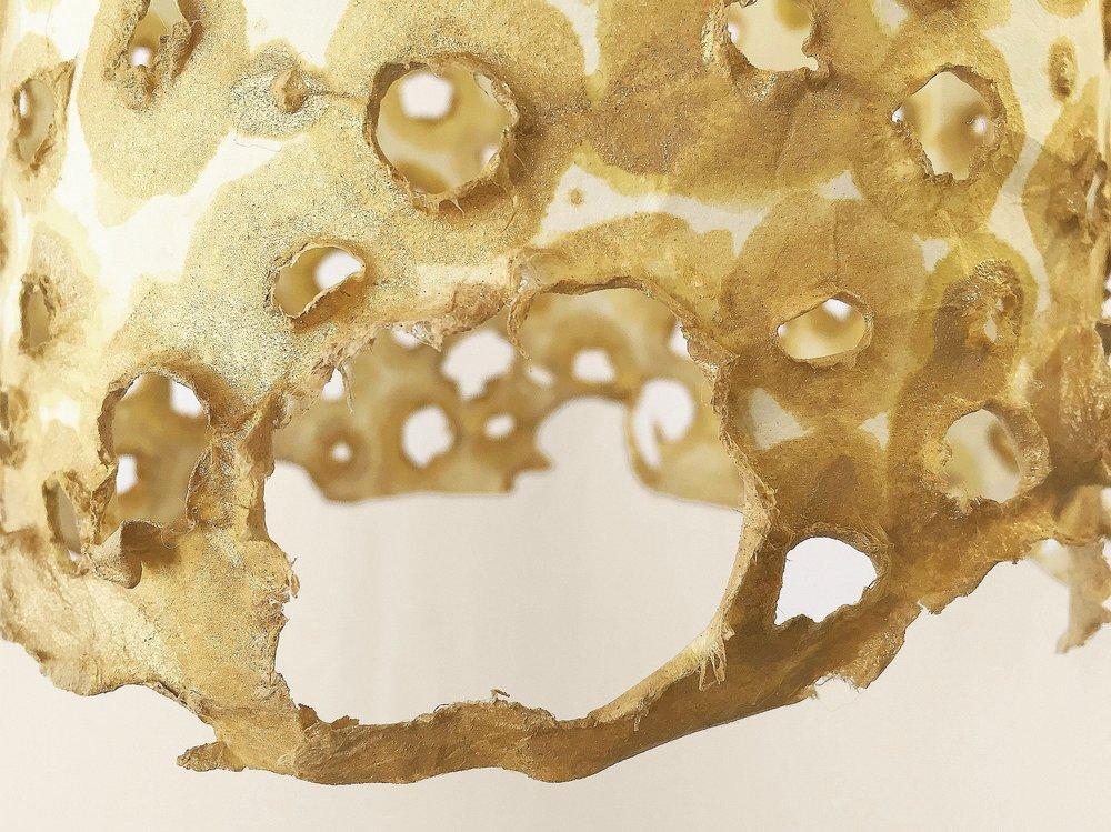 golden noltilus (2).jpg