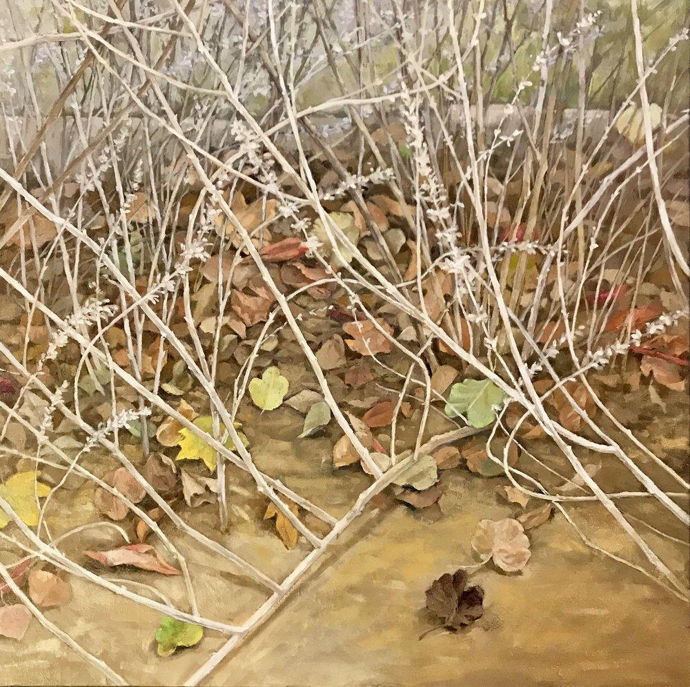 """Sage Garden, 2019  oil on canvas  24""""x 24""""x 1.5"""""""