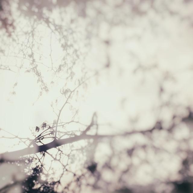 tree book 4.jpg