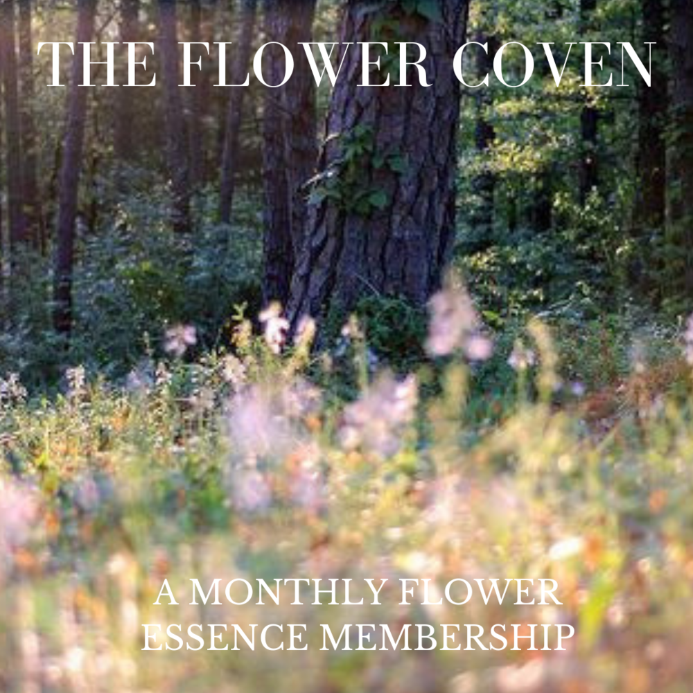 Copy of FLOWER COV.png