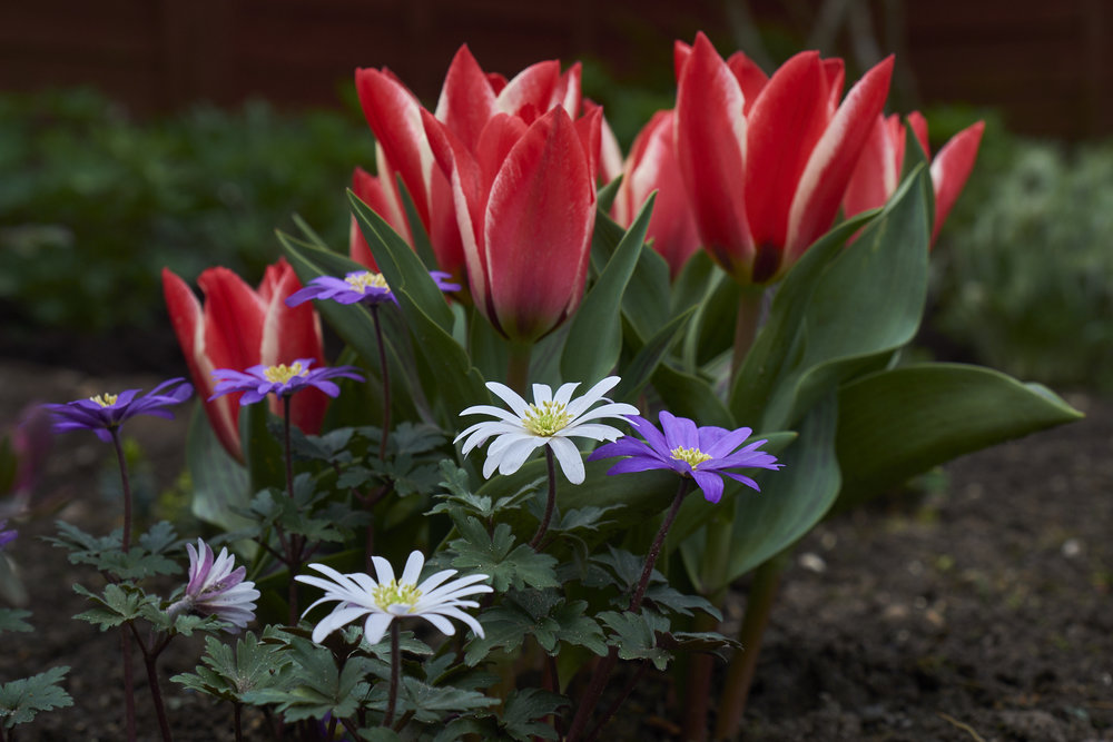 DSCF1048_Apr18_garden.jpg
