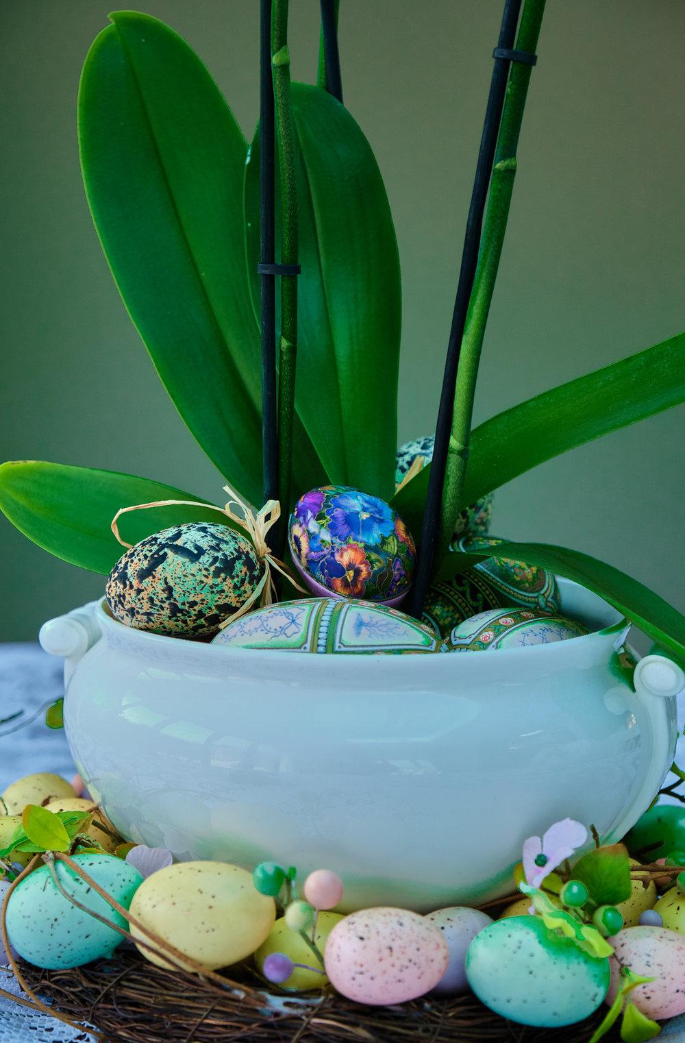 _DSF5276 - Easter-web.jpg