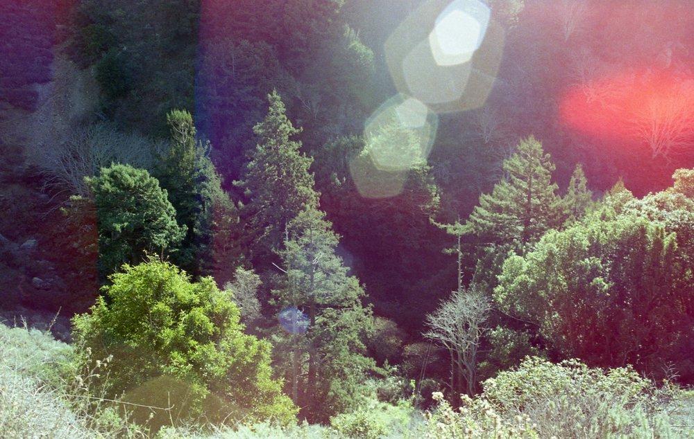 Nika Rainbow013.jpg