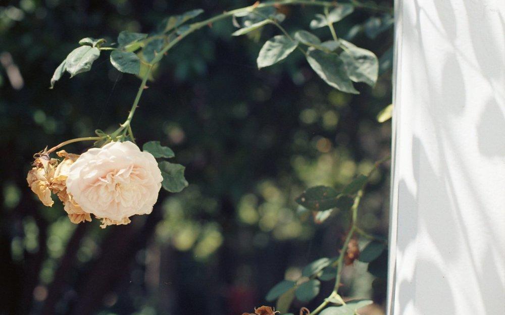 Botanical Gardens004.jpg
