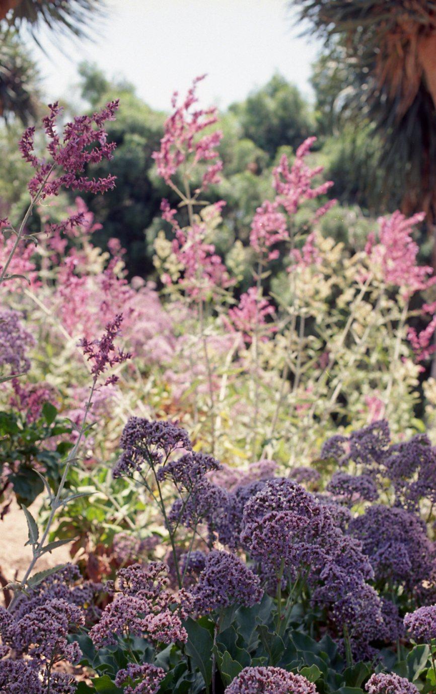 Botanical Gardens009.jpg