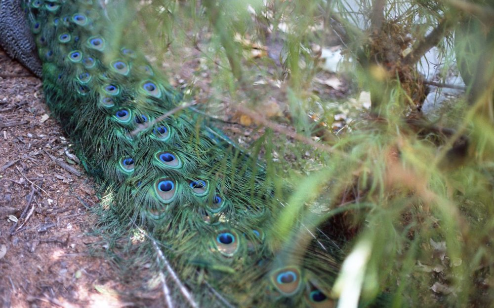 Botanical Gardens014.jpg