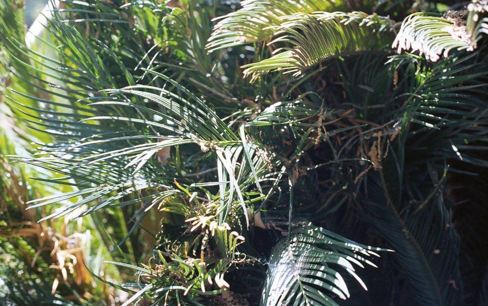 Botanical Gardens017.jpg