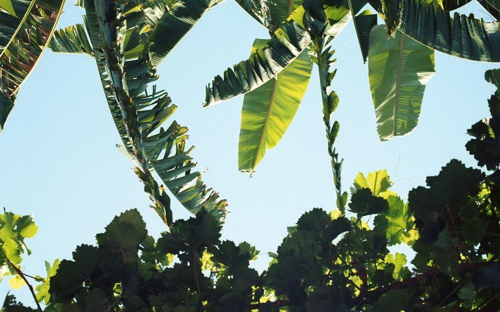 Botanical Gardens029.jpg
