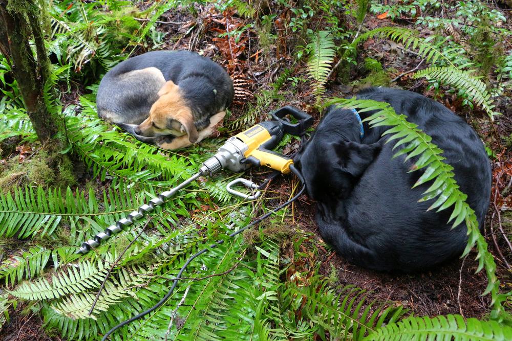 Dogs w Drill.jpg