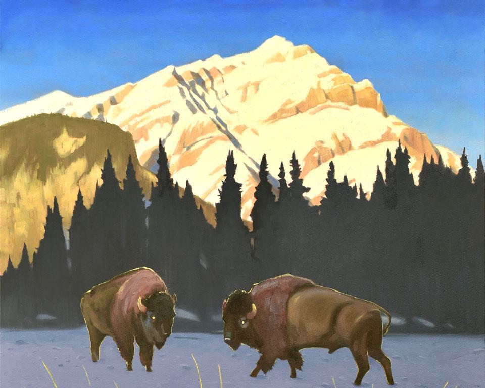 Bison, Banff National Park