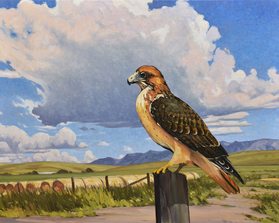 fenton-red-tailed-hawk-32x40.jpg