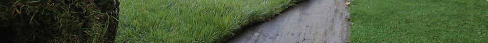 divider-grass-image.jpg