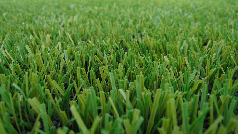 rymar-grass-hero-image.jpg